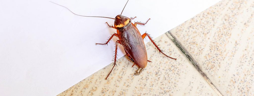 Why is it so hard to control cockroaches?